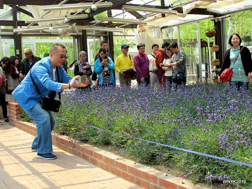 Lavender Greenhouse