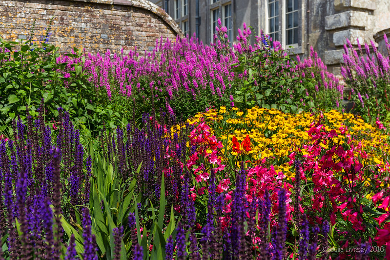 Colourful borders at Kingston Lacy