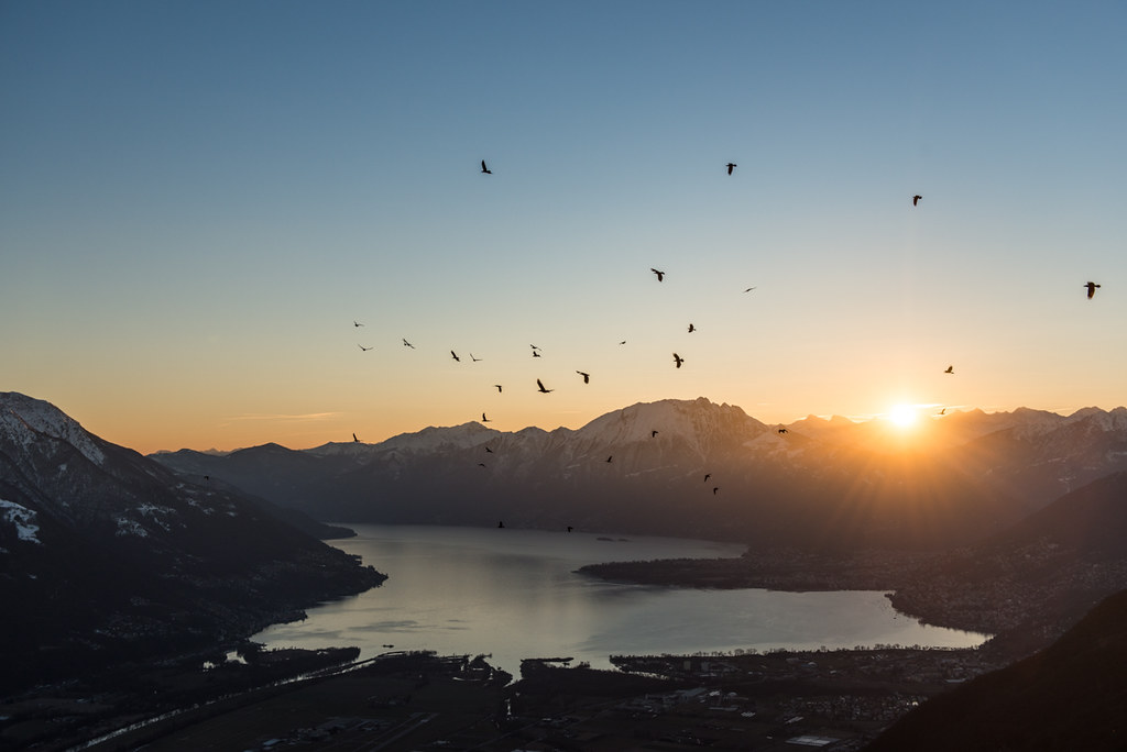 Lago Maggiore and some birds