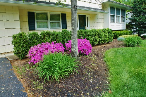 At Home:  New Shrubs