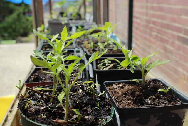 MVCS greenhouse