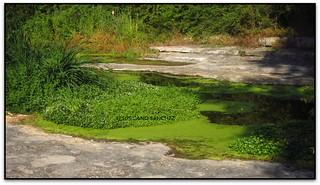 El Tenes amb l'aigua verdosa