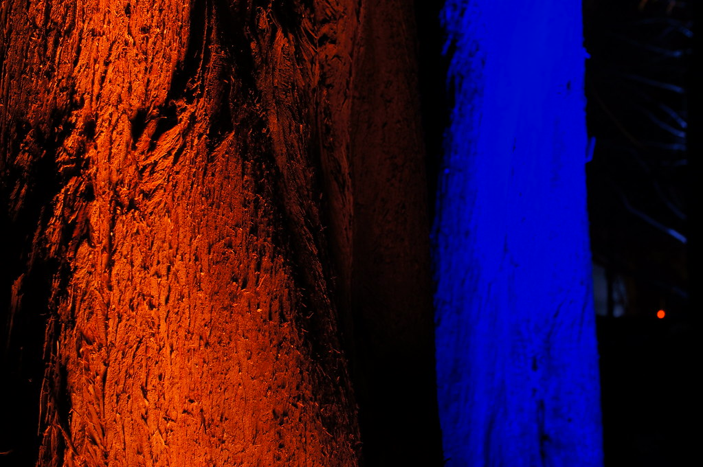 trees orange blue b ume orange blau bernhard friess flickr. Black Bedroom Furniture Sets. Home Design Ideas