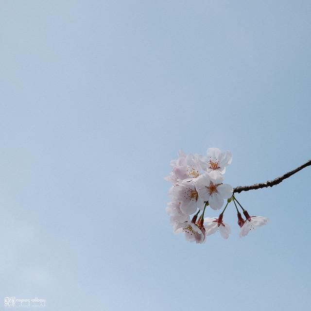 北九州之春 | 13