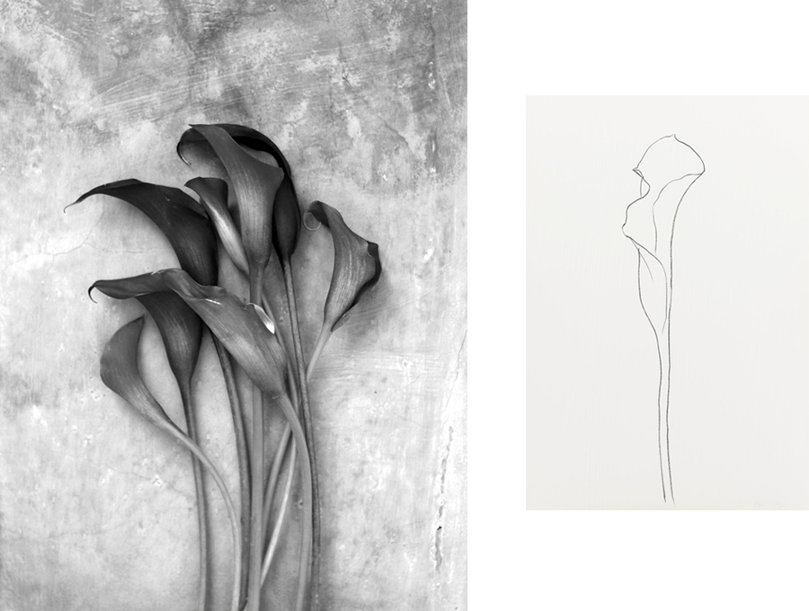 AMM blog | the creative process and drawing inspiration from the Calla Lily