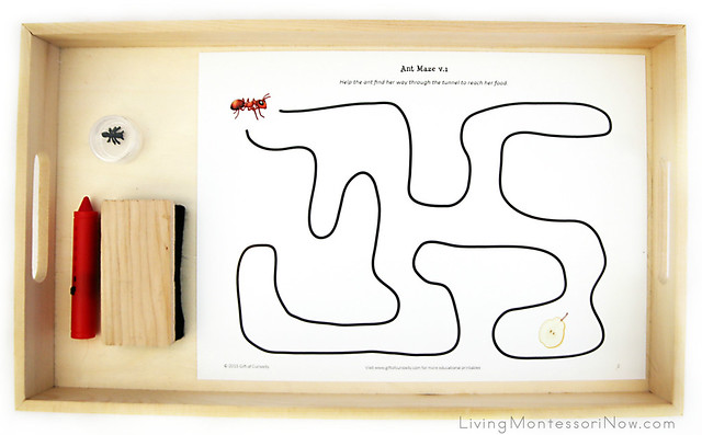 Ant Maze Activity