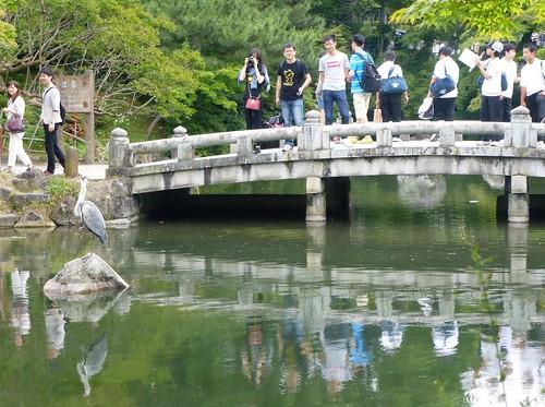 jp16-Kyoto-Maruyama-koen (1)