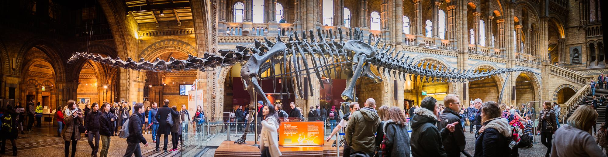 Estegosaurio en el Museo de Historia Natural.