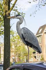 NEDERLAND - Delft 70