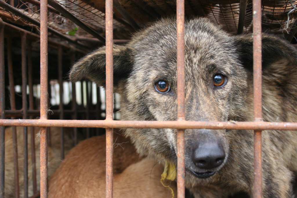 Video Caged Dog Showing His Gum
