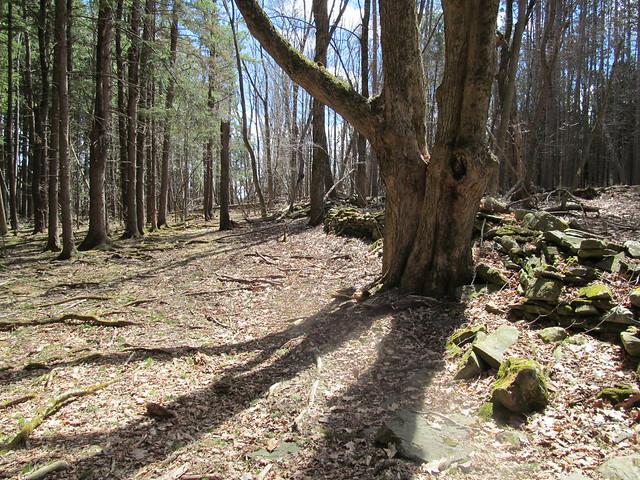 Trail up alongside Rensselaerville       Falls