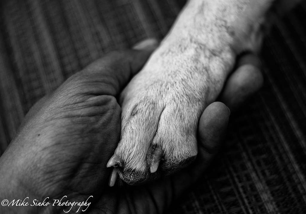 Image result for paw and hand