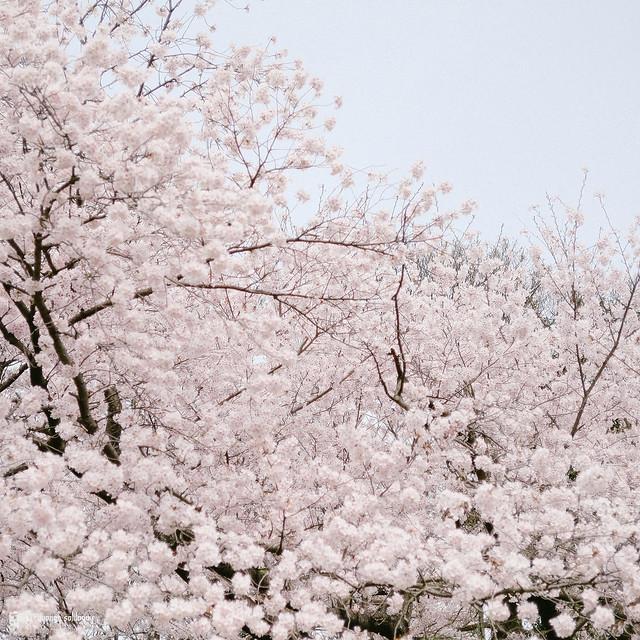 北九州之春 | 20