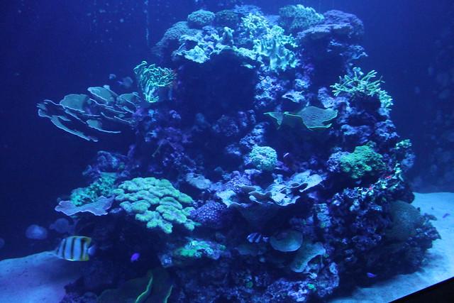 oceanario-lisboa26