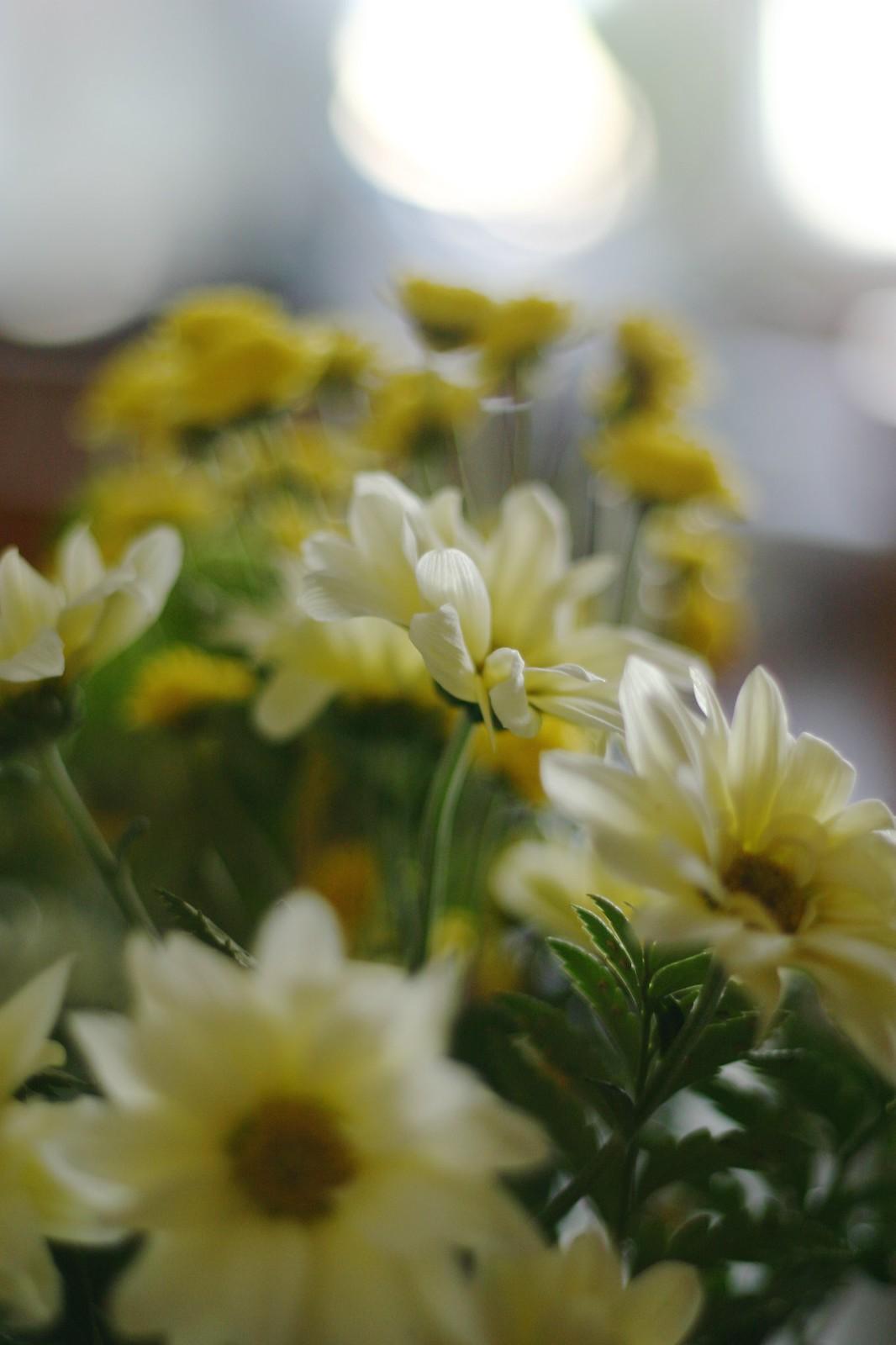 + flores_8_20150116 - Version 2