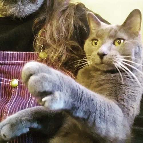 Lester is reaching for something. Dunno what. #Lester #CatsOfInstagram