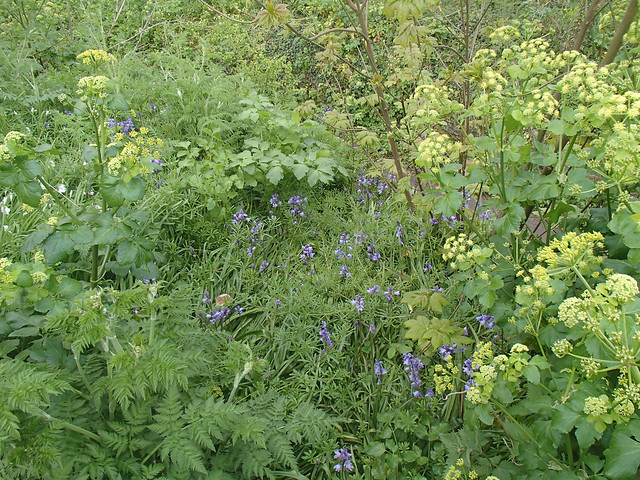 woodland-mix-8may15