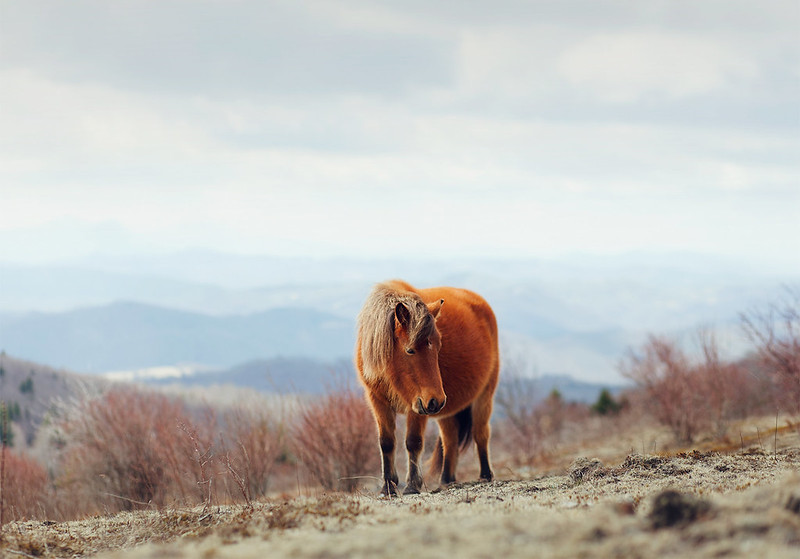 Grayson Highlands