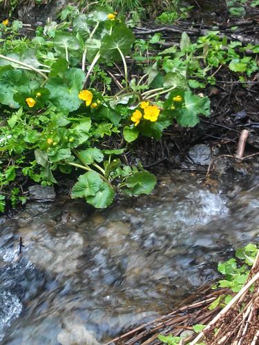 Joli ruisseau