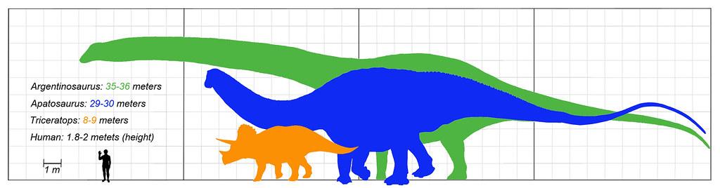 Size comparison: Argentinosaurus (green), Apatosaurus (blu ...
