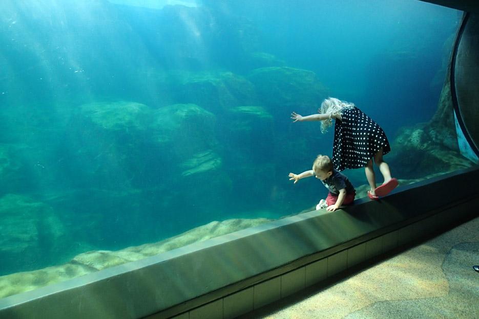 022415_aquarium09