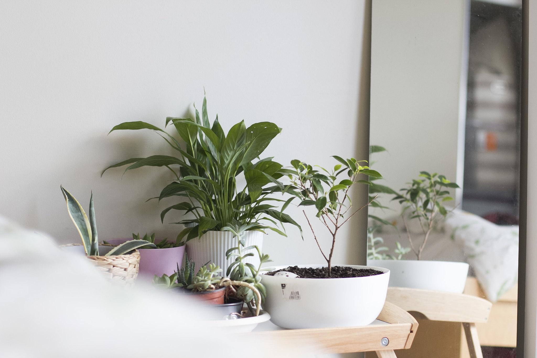 Plantevenner