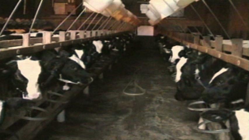 未處理的禽畜糞大量用在蔬菜的種植上(圖片來源:便便危機,天馬行空)