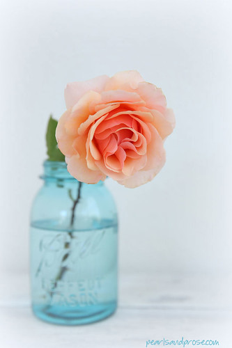ball_jar_rose_web