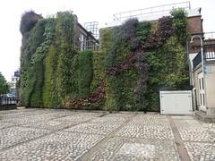 BIG GREEN WALL
