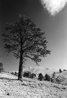Tree And Hilltop | by allenbr
