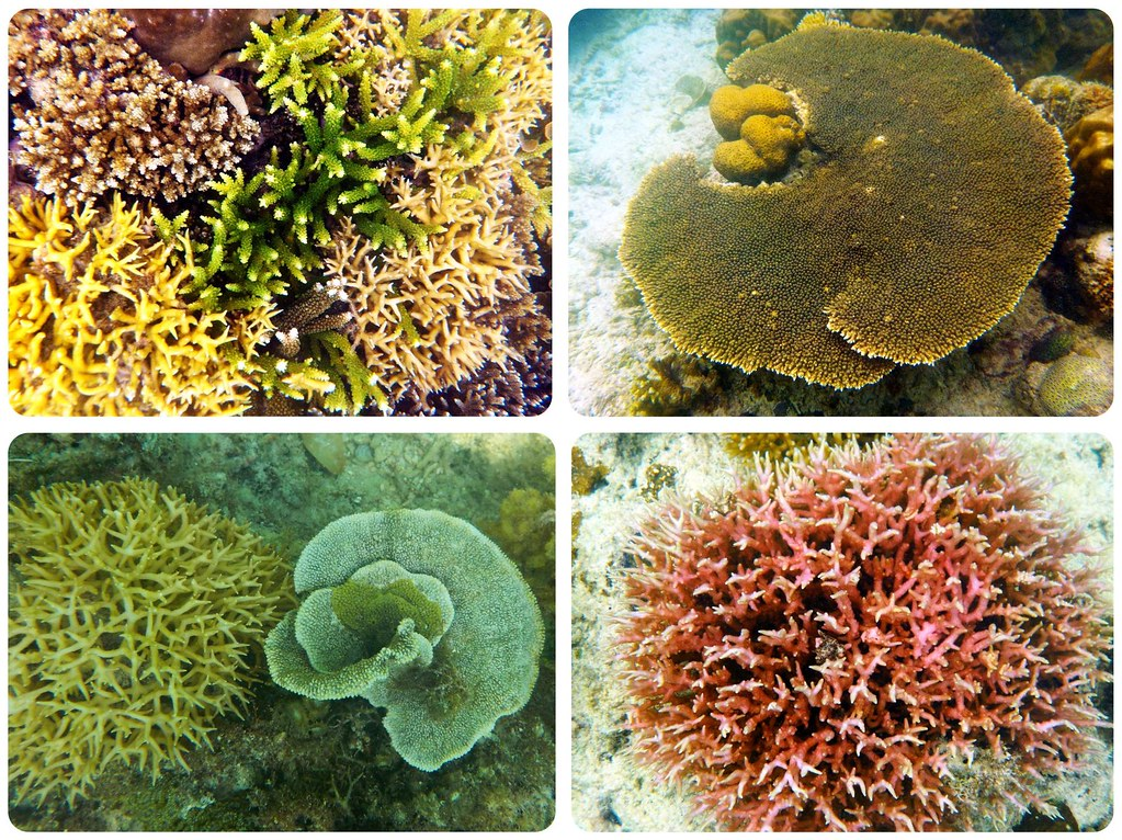 Bacuit Archipelago underwater