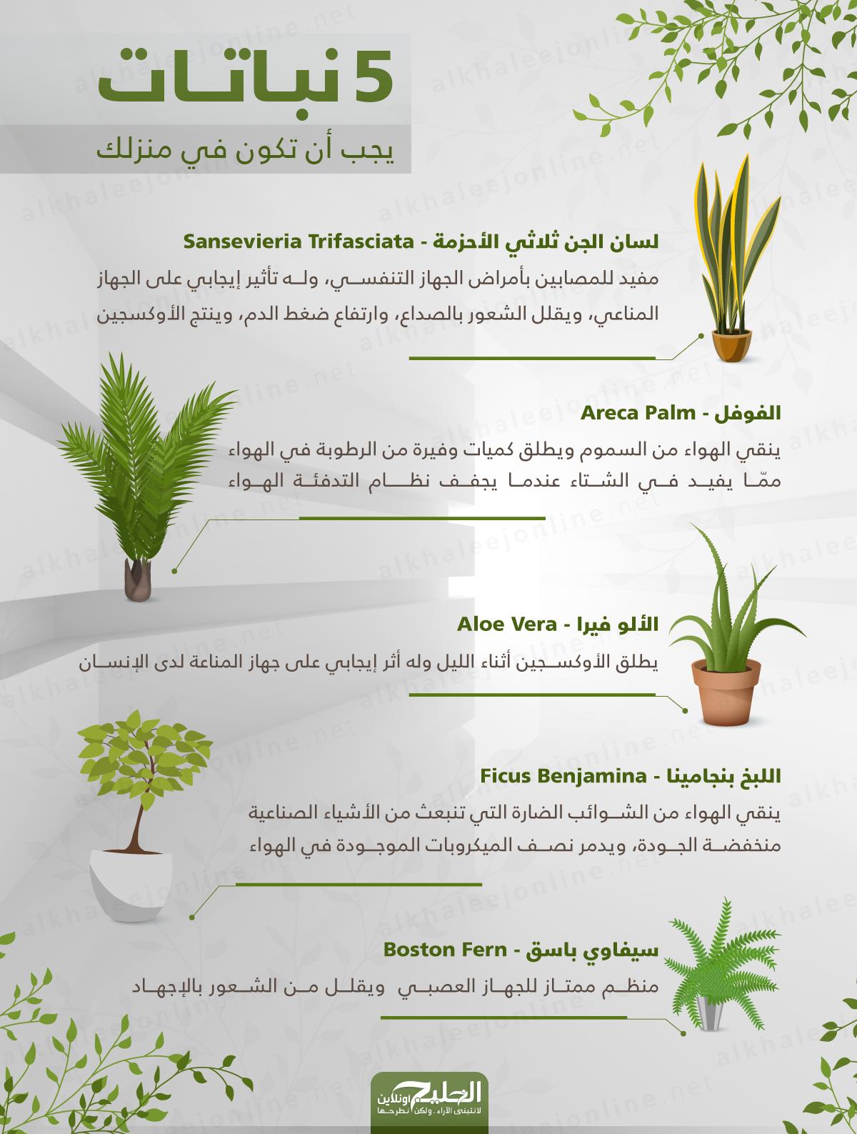 5-نباتات-يجب-ان-تضعها-في-البيت