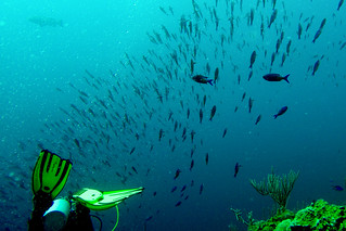 Scuba (by Pete) | by goingslowly