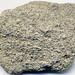 Fossiliferous peloidal phosphorite (Zhongyicun Member, Zhujiaqing Formation, Lower Cambrian; south of Ercaicun, Yunnan, China)