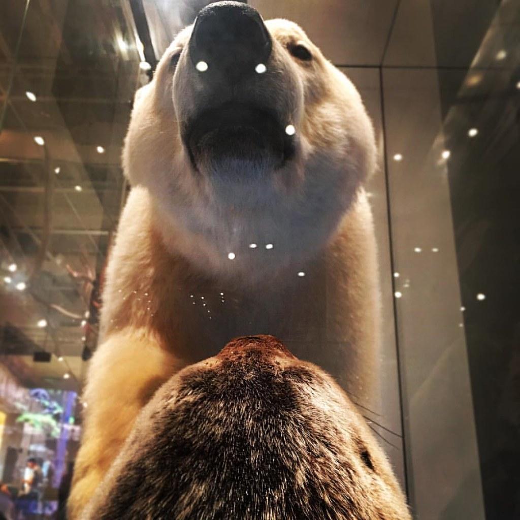 polarbear #seal #ROM #royalontariomuseum #pov #whatsfordi… | Flickr