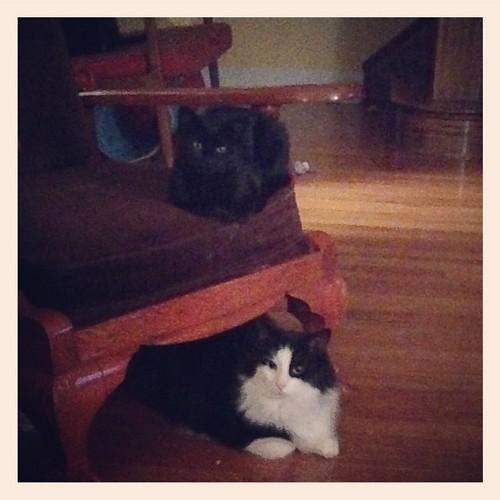 Mei-Mei & Felix