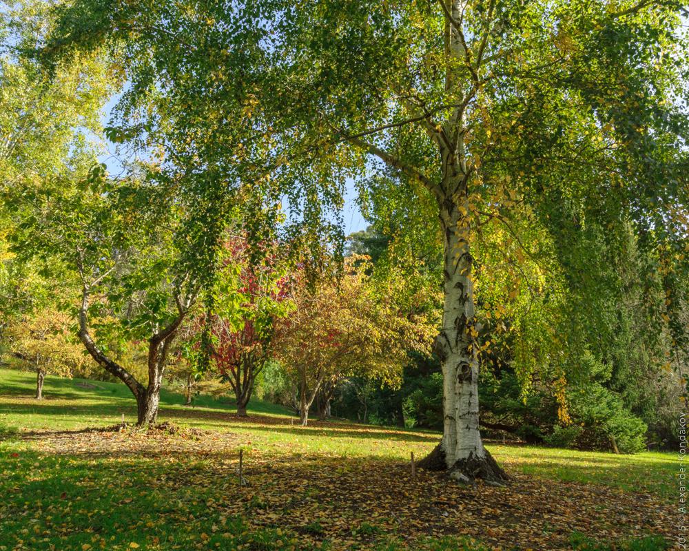 20150422 Mount Lofty Botanic Garden-36