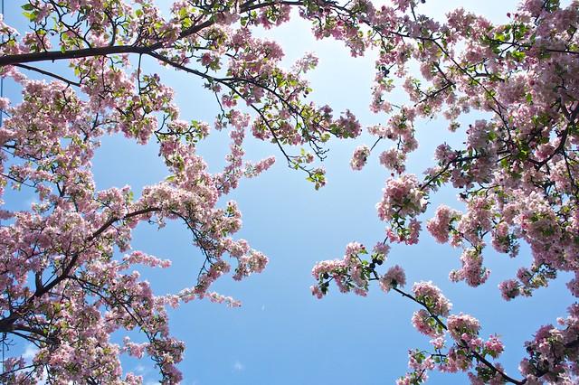 anteketborka.blogspot.com, pommiers 3