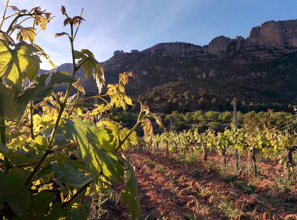 Vinranka och Montsant
