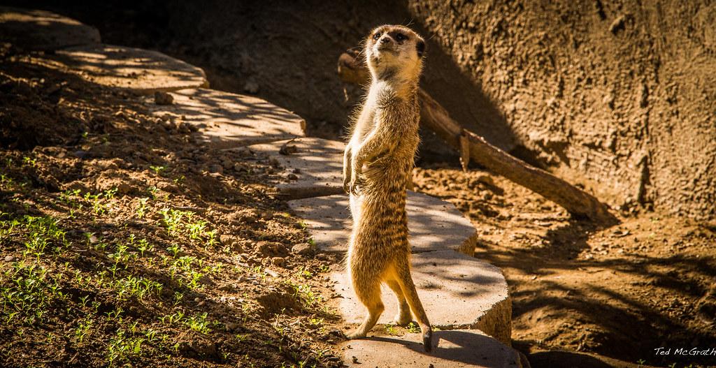 2014 - san diego zoo