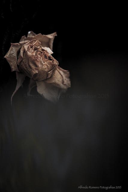 La negra flor