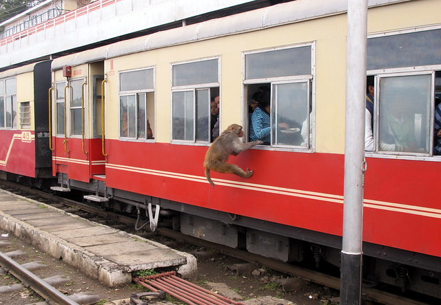 Kalka Shimla Railway - Monkey Thief