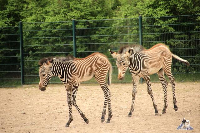 Tierpark Berlin 09.05.2015  159