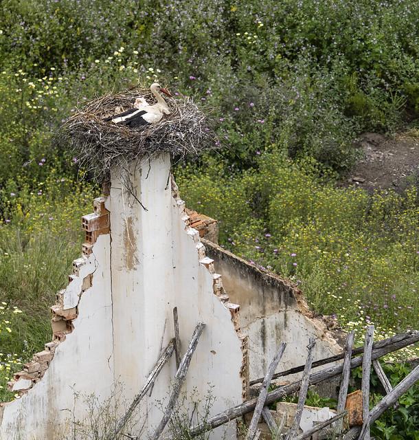 white stork 456 (551)