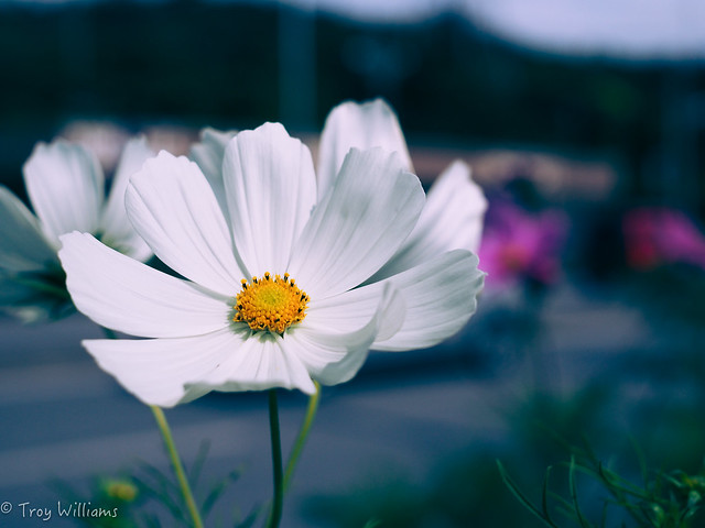 E-M5MKII crossed cosmos