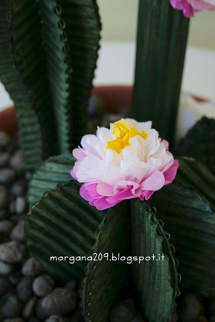Cactus_04w