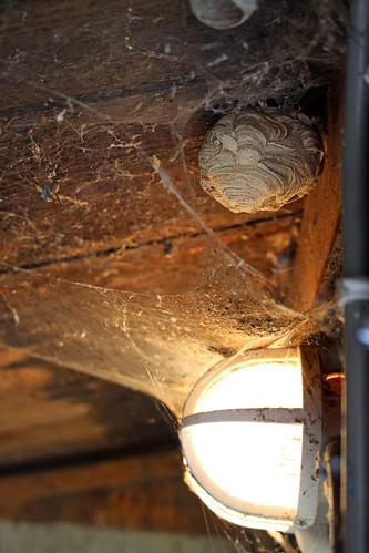 abandoned wasps nests