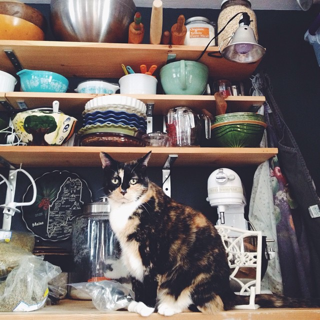 Ginger swears she was just sniffing herbs from the co-op and it's my fault for not having put them away yet so there. She then admonished me for my untidiness. #catsofinstagram