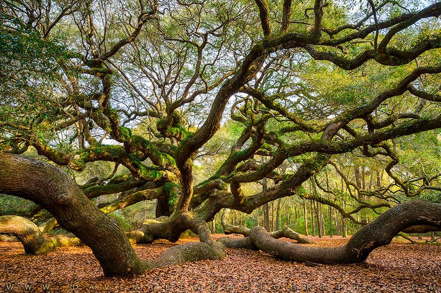 Charleston Sc Angel Oak Tree South Carolina Landscape Flickr