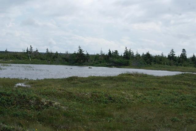 Newfoundland Pond